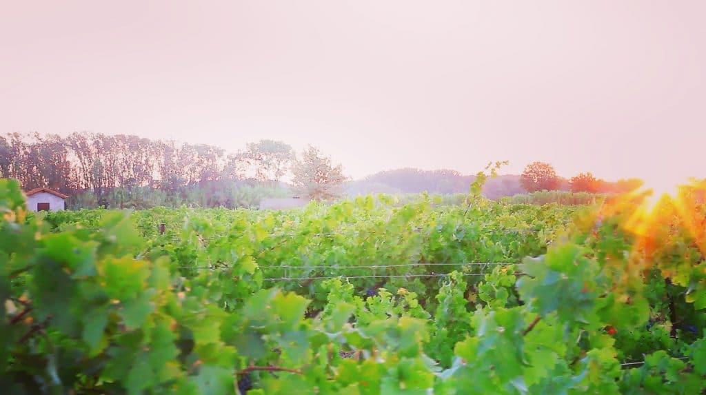 Le vignoble Villa Noria à Montagnac